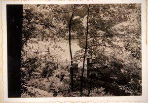 Blick durch die Bäume zum Freibad Gräfenberg